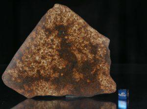 NWA 13165 (105.59 gram)
