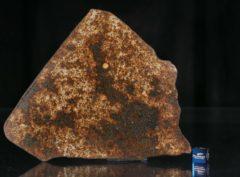 NWA 13165 (112.39 gram)
