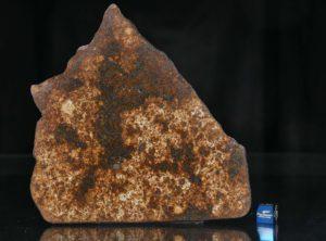 NWA 13165 (133.49 gram)