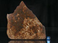 NWA 13165 (136.70 gram)