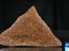 NWA 13647 (101.2 gram)