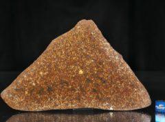 NWA 13647 (91.50 gram)