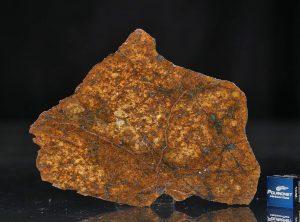 SAHARA 99477 (29.0 gram)