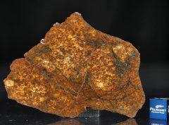 SAHARA 99477 (25.2 gram)