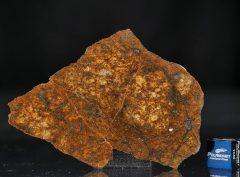SAHARA 99477 (21.2 gram)