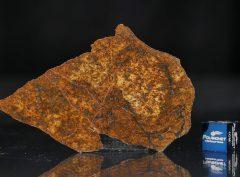 SAHARA 99477 (15.1 gram)