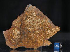 SAHARA 99477 (124.2 gram)