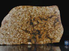 NWA 13648 (239 gram)