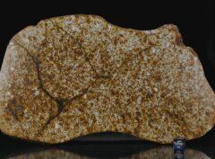 NWA 13648 (385 gram)