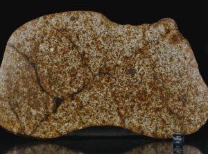 NWA 13648 (430 gram)