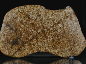 NWA 13648 (440 gram)