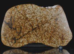 NWA 13648 (461 gram)