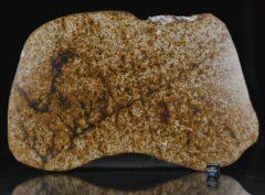 NWA 13648 (487 gram)