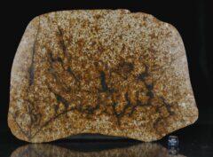 NWA 13648 (524 gram)