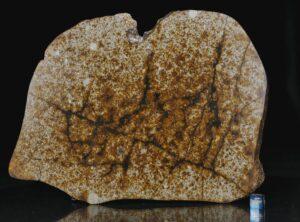 NWA 13648 (458 gram)