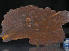 CANYON DIABLO SHALE (30.3 gram)