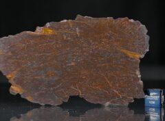 CANYON DIABLO SHALE (32.5 gram)