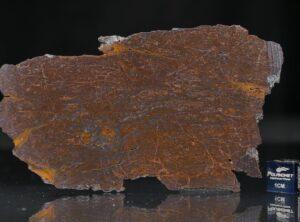 CANYON DIABLO SHALE (30.4 gram)