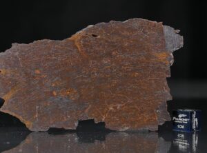 CANYON DIABLO SHALE (29.9 gram)