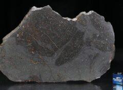NWA 13267 (77 gram)