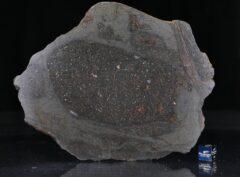 NWA 13267 (115.8 gram)
