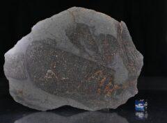 NWA 13267 (125 gram)