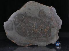 NWA 13267 (121.5 gram)