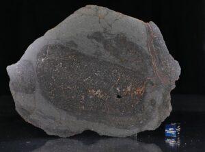 NWA 13267 (121.2 gram)