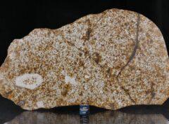 NWA 13648 (936 gram)