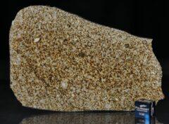 NWA 6255 (69.33 gram)