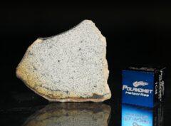 NWA 13446 (2.67 gram)