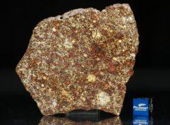 NWA 7814 (27.73 gram)