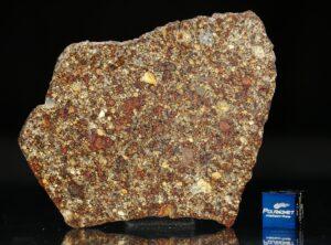 NWA 7814 (20.24 gram)