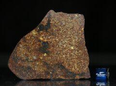 NWA 4555 (36.83 gram)