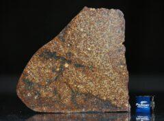 NWA 4555 (37.18 gram)