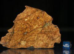 NWA 8757 (28.70 gram)