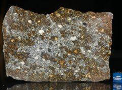 NWA 12263 (74.8 gram)