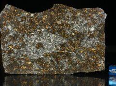 NWA 12263 (77.2 gram)