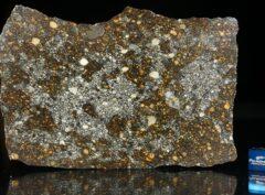 NWA 12263 (76.0 gram)