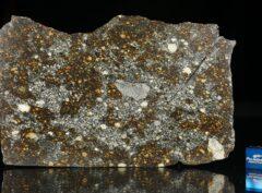 NWA 12263 (67.3 gram)