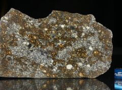 NWA 12263 (83.3 gram)