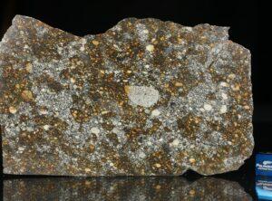 NWA 12263 (68.5 gram)