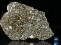 NWA 12263 (71.4 gram)