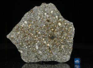 NWA 12263 (70.4 gram)
