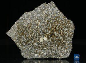 NWA 12263 (79.2 gram)