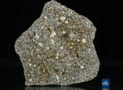 NWA 12263 (80.5 gram)