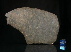 NWA 13767 (80.5 gram)