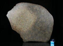 NWA 13767 (167 gram)