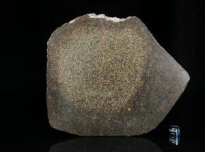 NWA 13767 (242 gram)