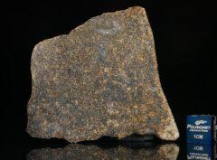 NWA 13696 (18.31 gram)